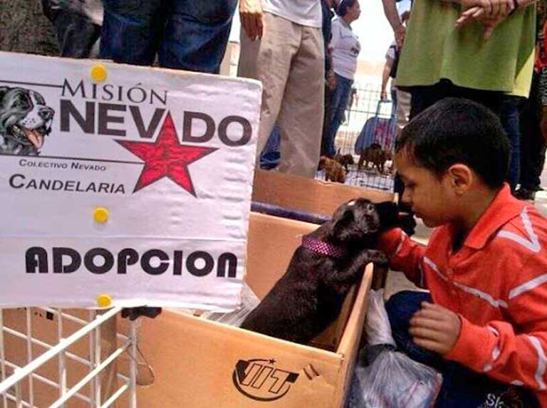 Nevado Mission started the second day of national registration of volunteers